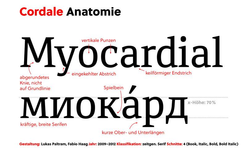 Cordale Anatomie